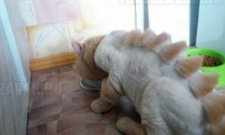 A haverom macskája…Elég vad mi?