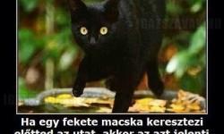 Fekete macska…