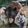 Hihetetlen barátság tigris, medve és oroszlán között