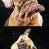Így rázzák meg magukat a kutyák