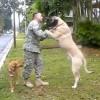 Így örülnek a kutyusok a rég nem látott gazdinak