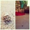 A barátom nem szeretné elveszíteni a teknősét…