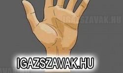 Átlagos emberi kéz