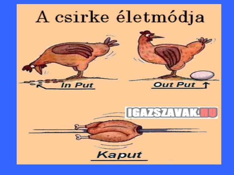 A csirke életmódja