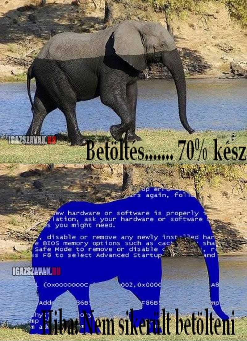 Az elefánt töltödik, kérem várjon