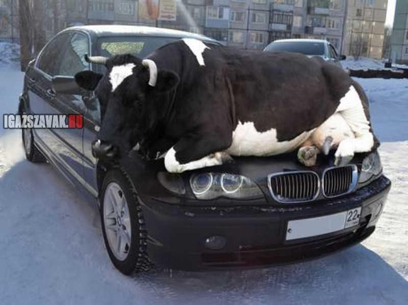 Egy nagy problémám volt az autómmal reggel, nem találtam a motorháztetőt