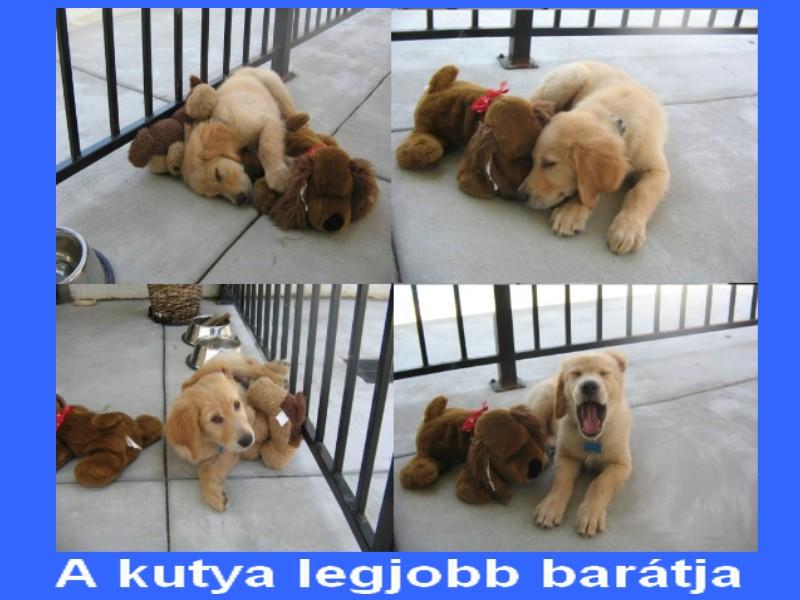 a kutya legjobb barátja