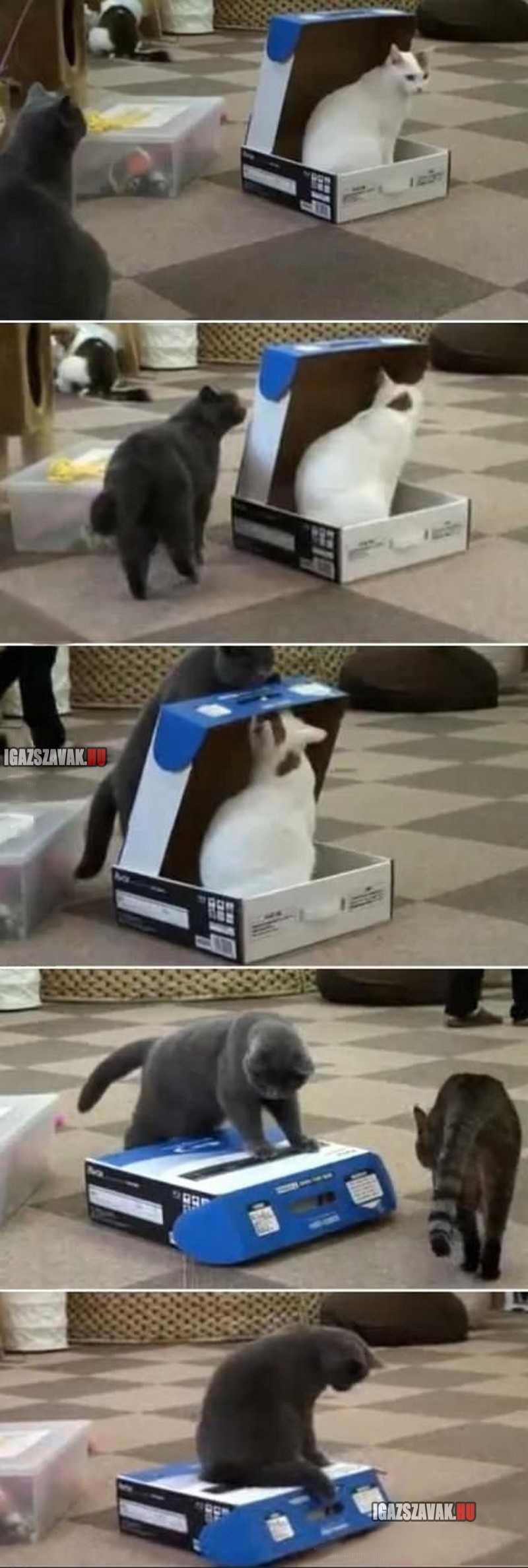 a macskák is lehetnek rosszak