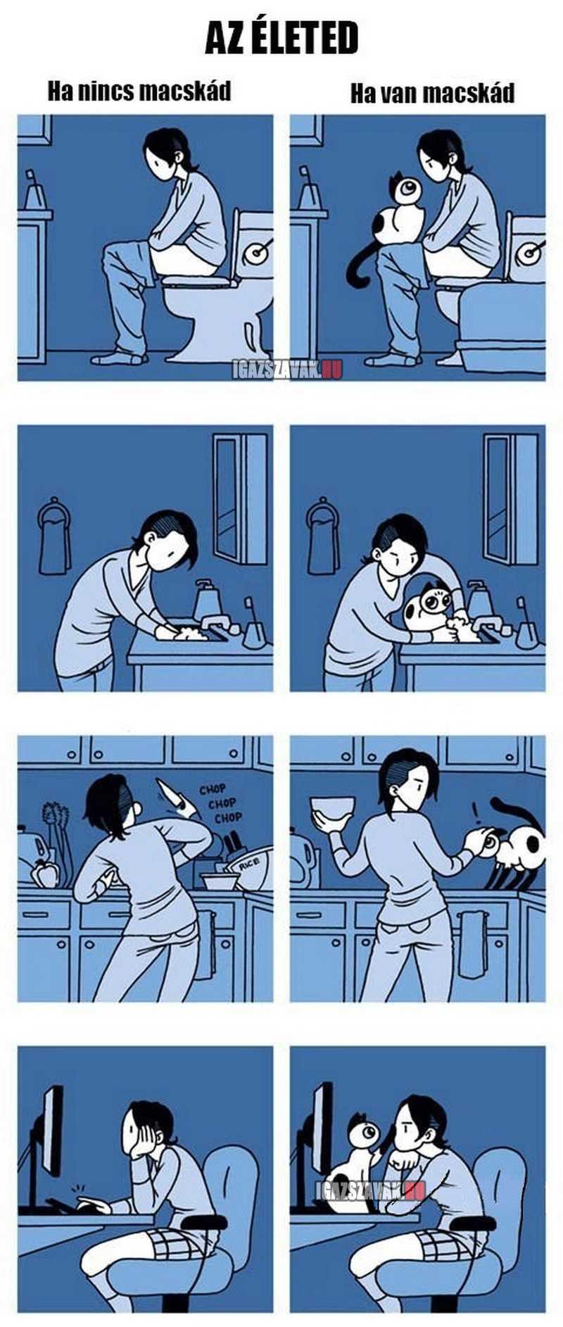 az élet macskával vs macska nélkül