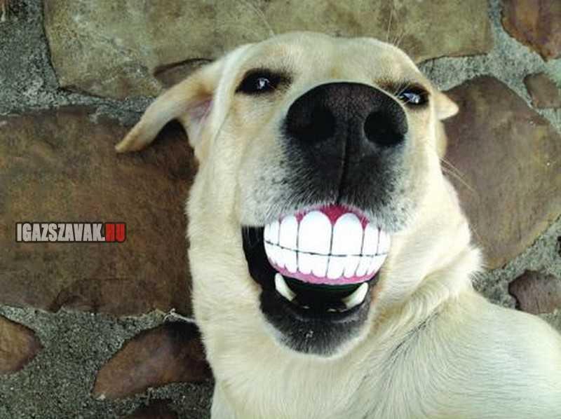 nézd milyen szép a mosolyom