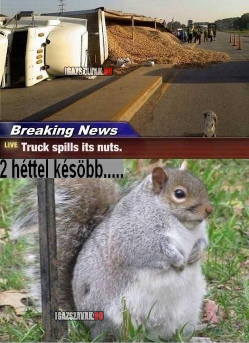 Egy dilis szőrös és jól lakott mókus