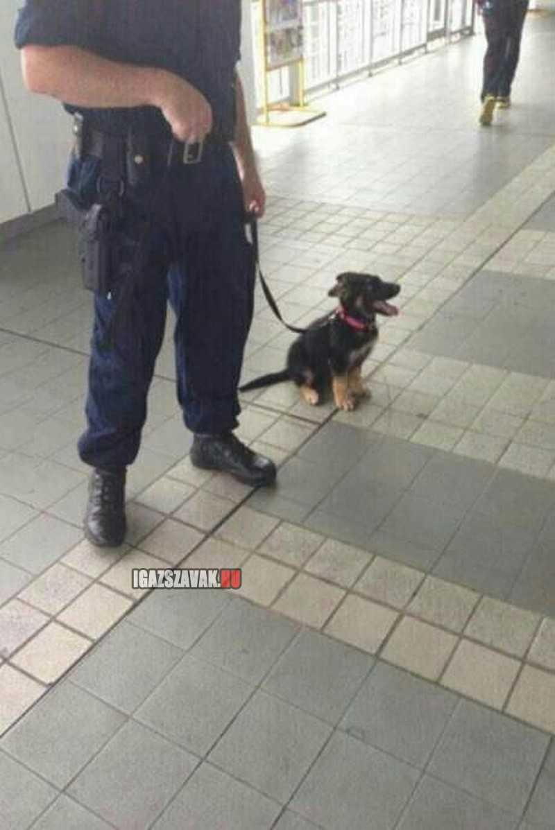 Egyszer én is nagy rendőrkutya leszek