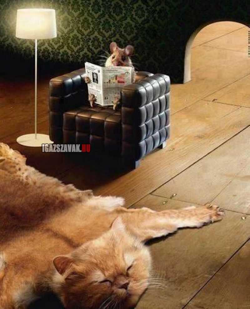 Tom és Jerry a valóságban