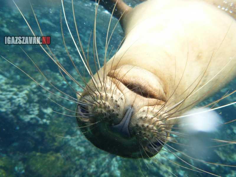 a galapagosi oroszlánfóka szívesen pozólt a kamerának