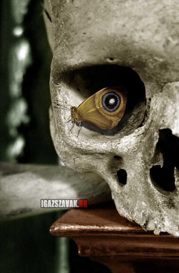 a szem a pillangó szárnya