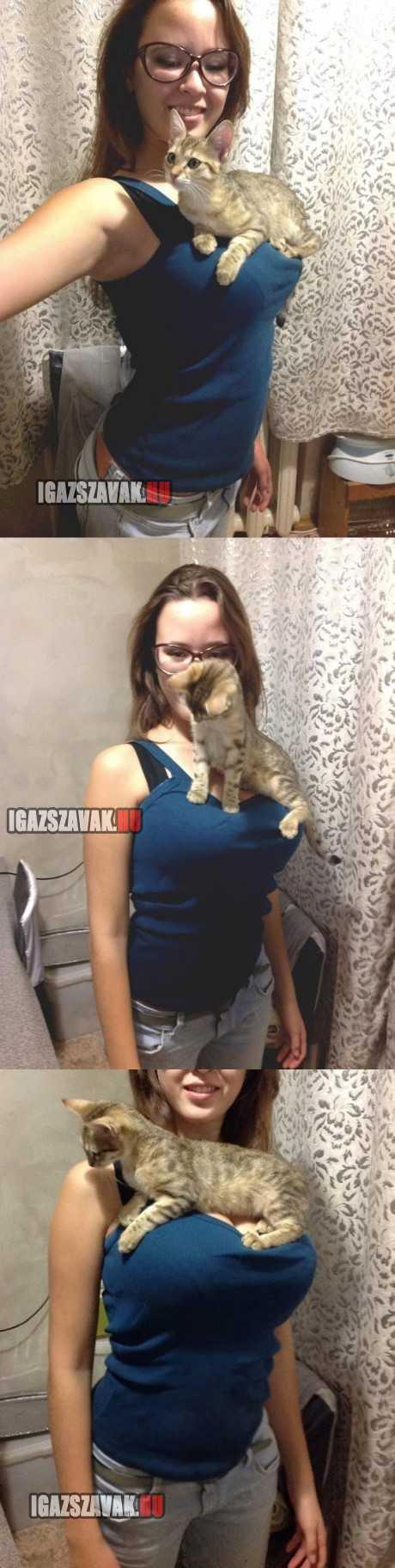a világ legboldogabb cicája