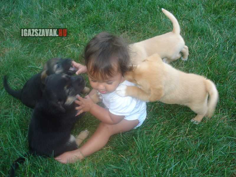 brutális kutyatámadás