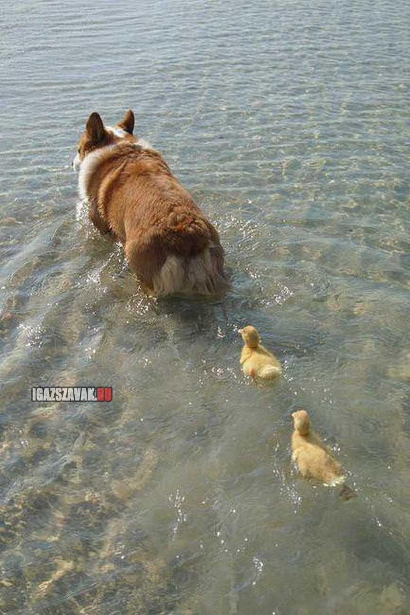 kövessétek gyerekek a mamát