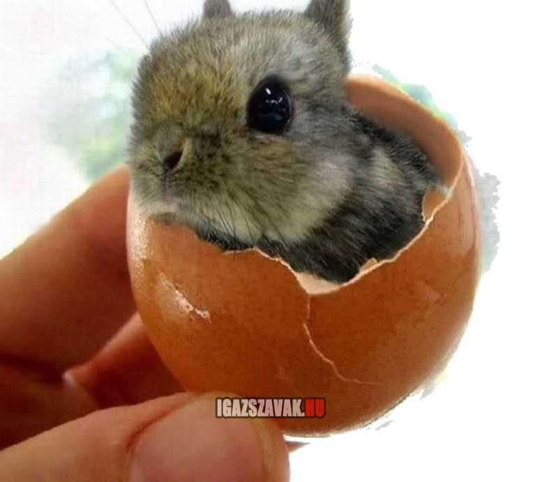mégis igaz a húsvéti történet, pedig hány évig félevezettek