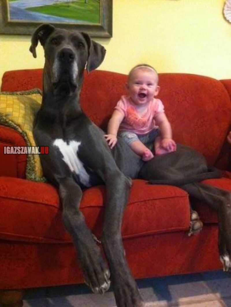 megtaláltam a legjobb baby sittert!