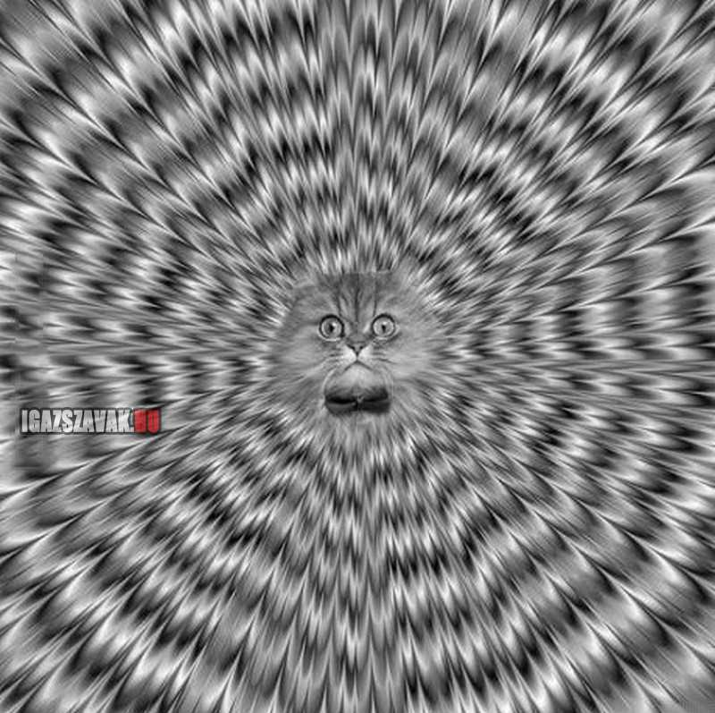 nézz, mélyen a szemembe!