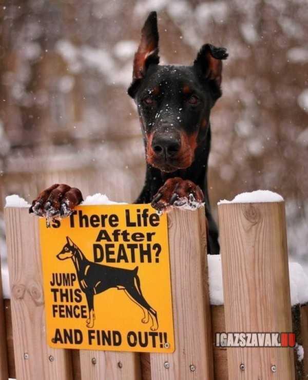 vajon van élet a halál után derítsd ki!