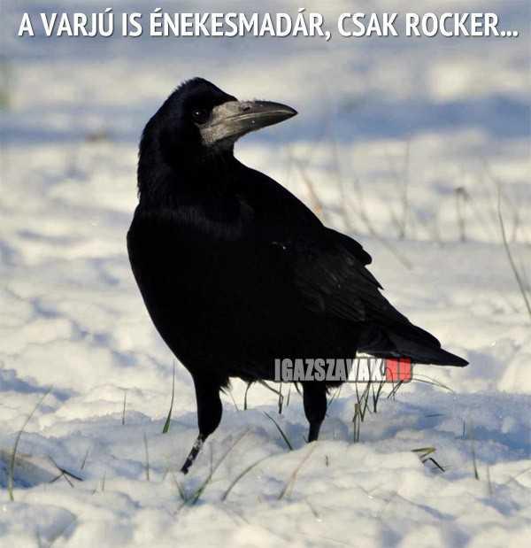 a varjú is énekesmadár
