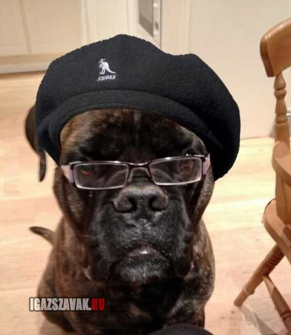 ez a kutya pont úgy néz ki mint samuel l jackson