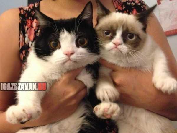 grumpy cat és az eddig sohasem látott tesója