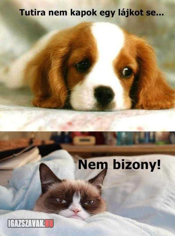 grumpy cat megint bizonyit