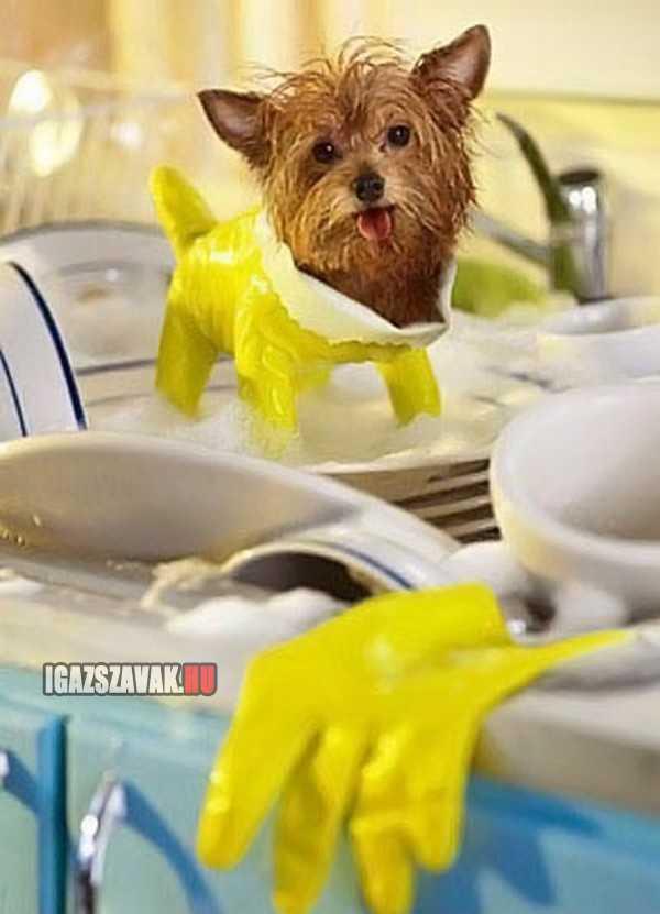 igy segít a kutyusom mosogatni