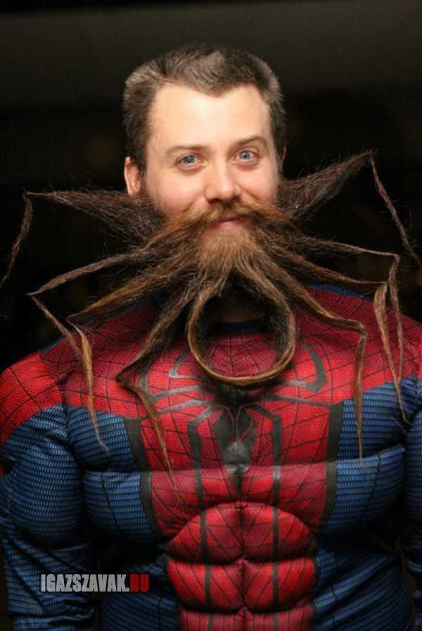 király pók szakáll