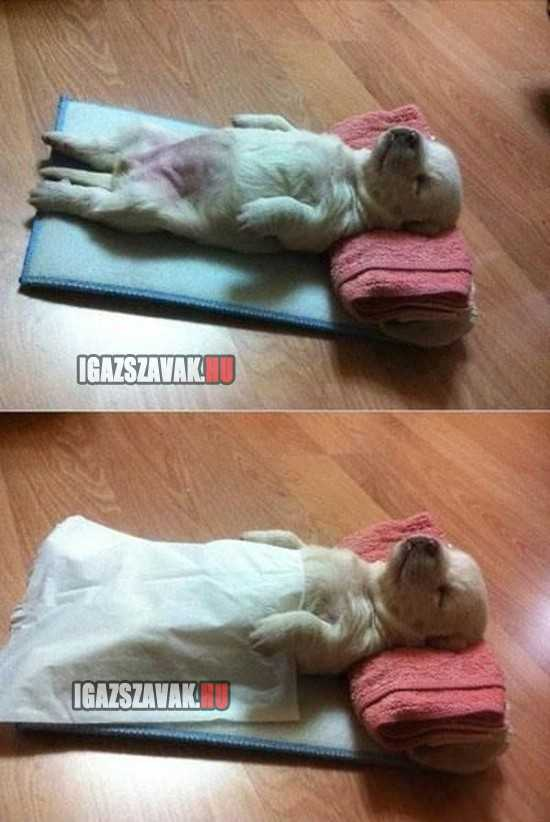 légyszi hagyj pihenni