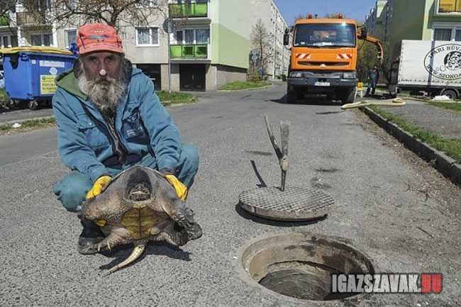 Óriási szörnyet találtak a győri csatornarendszerben