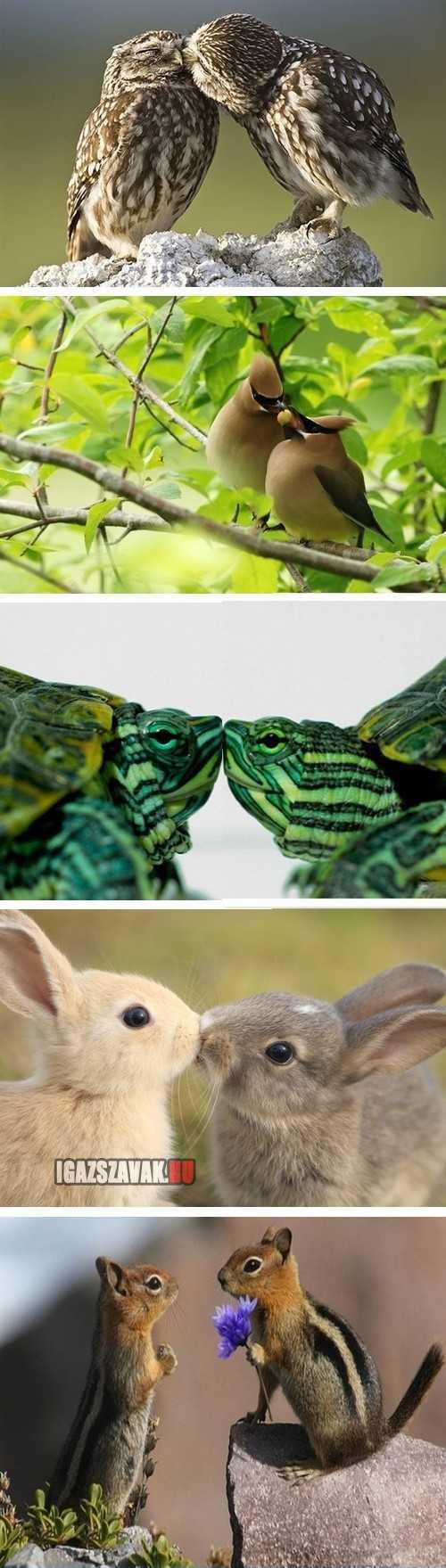 állati szerelmek
