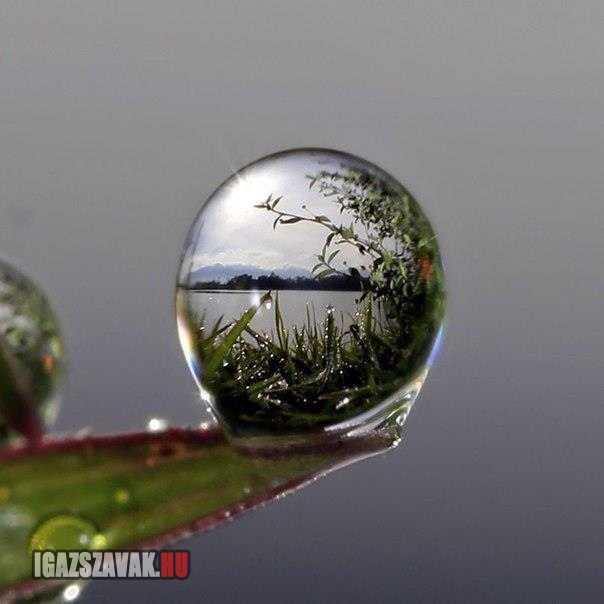 életkép egy vízcseppben