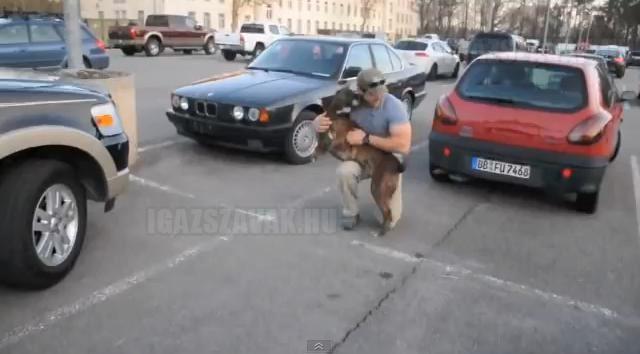 A kutyus, aki újra látja gazdáját egy év szolgálat után a háborúban
