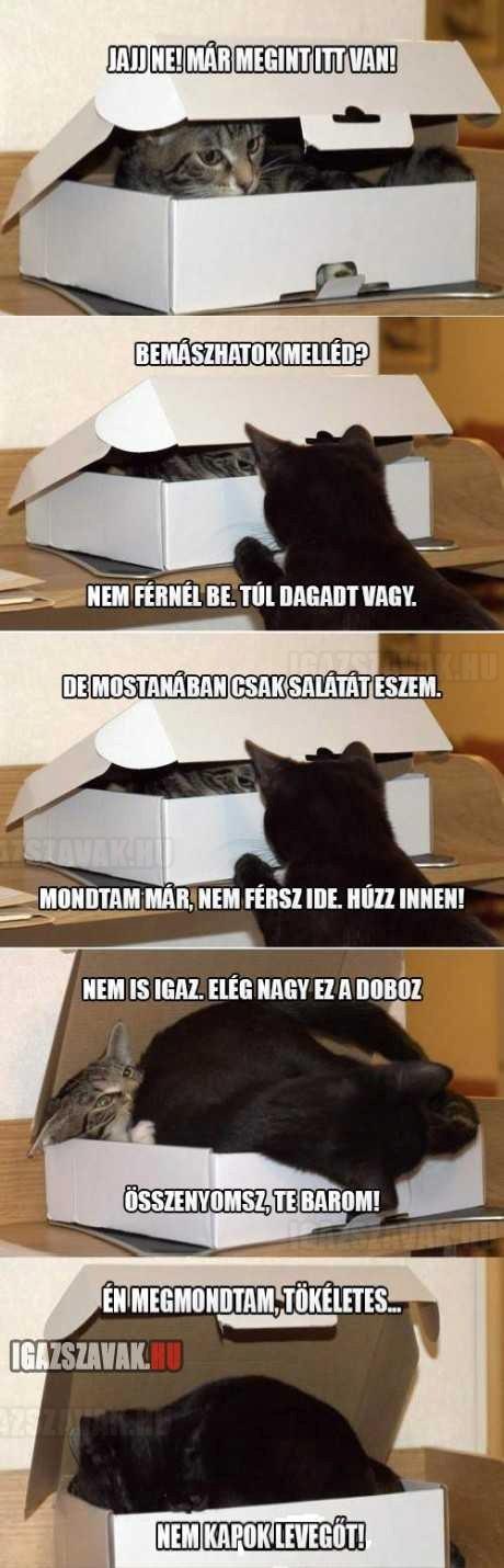 a macskák és a doboz