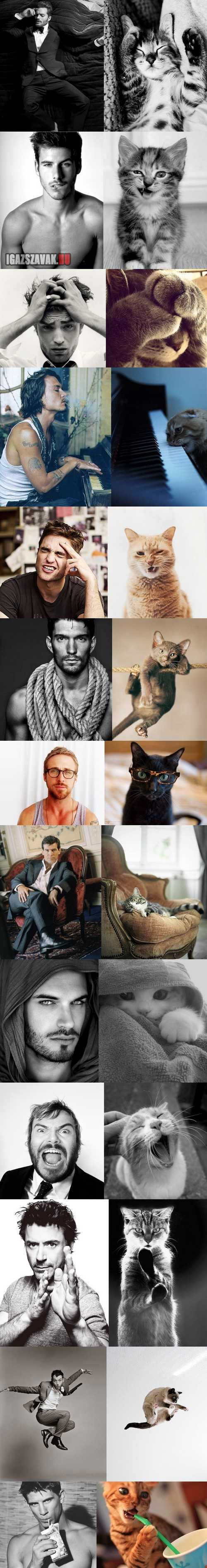 elképesztő hasonlóság pasik vs macskák