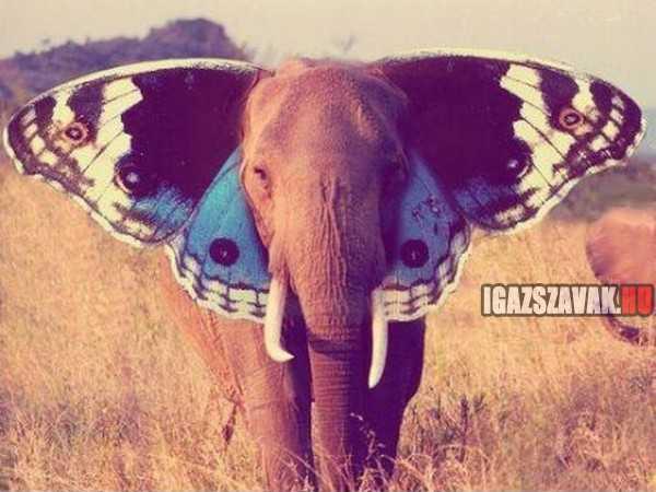 ki mondta, hogy az elefánt nem tud repülni
