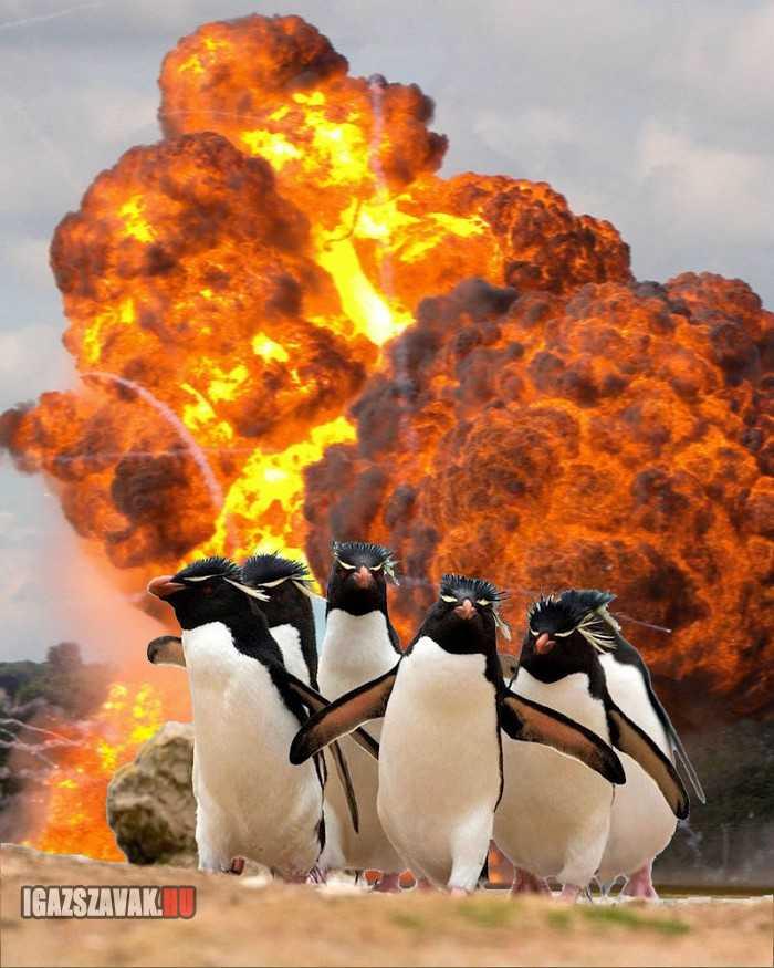 soha ne szórakozz a pingvinekkel