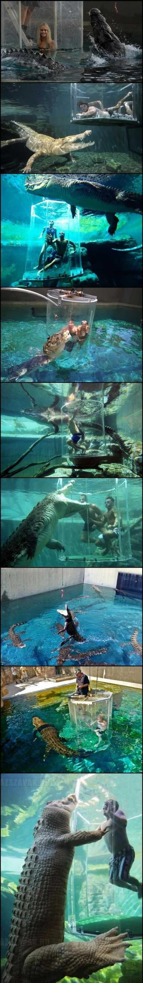 Krokodil park