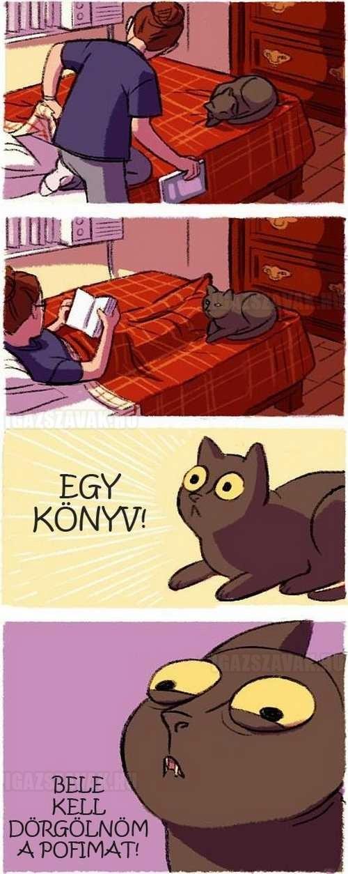 a cicák és a könyvek