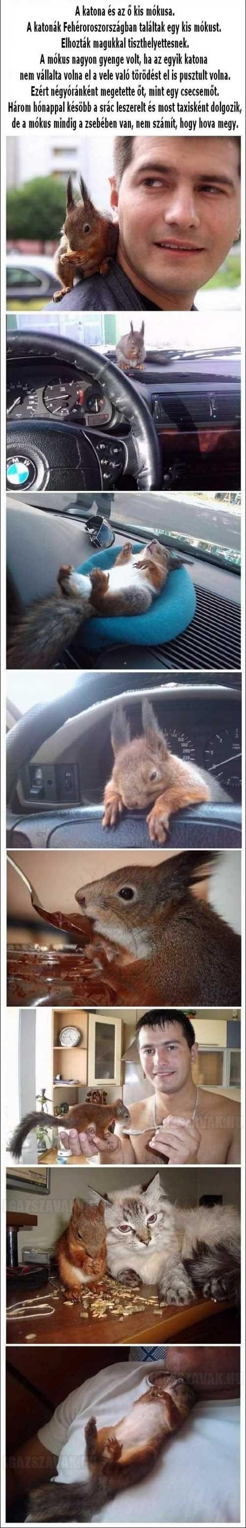 a katona és a kis mókus