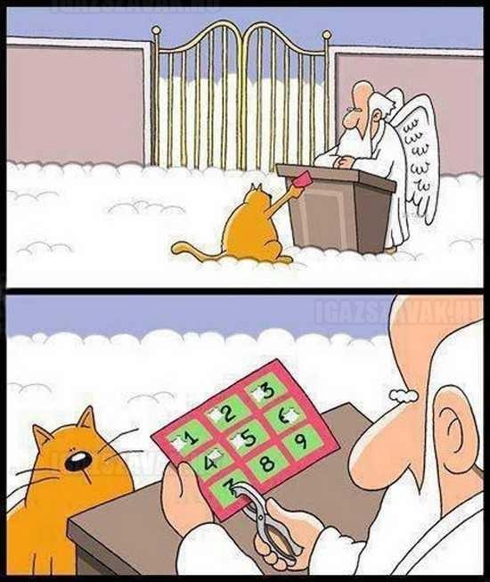 a macskák 9 élete