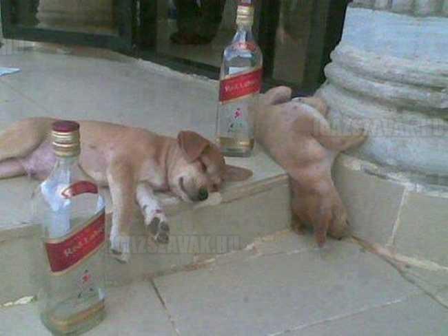 egy jó buli utáni kép