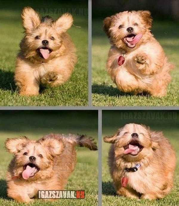 Talán ő a legboldogabb kutya a világon