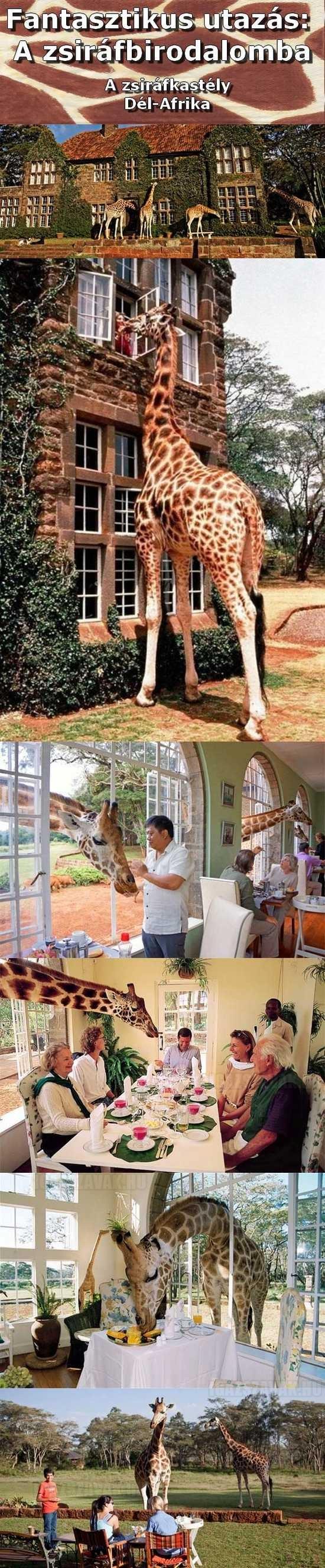 ahol együtt lóghatsz a zsiráfokkal