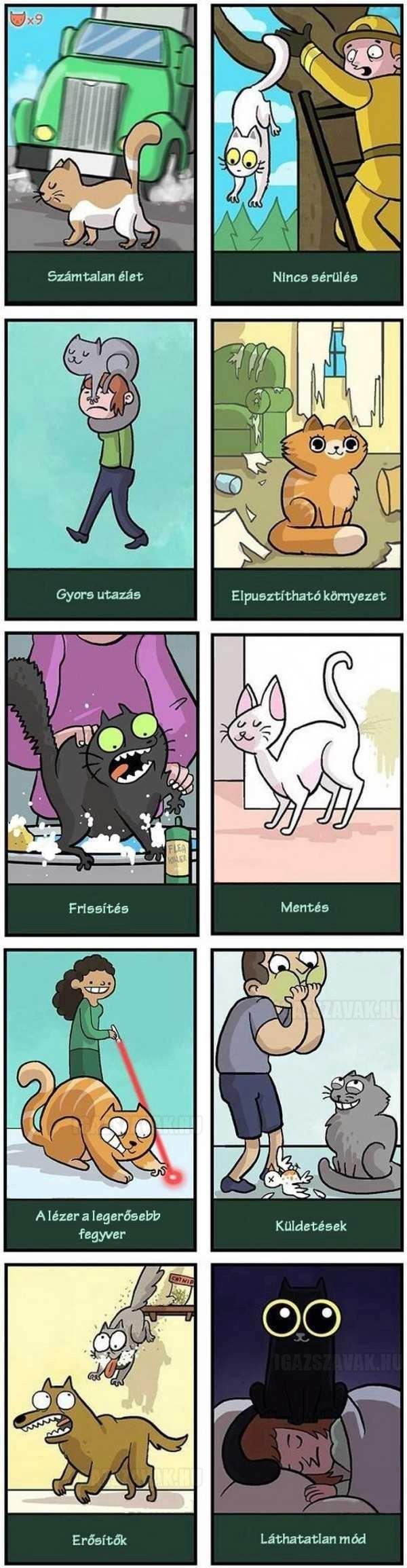 A macskák élete olyan, mint egy videojáték