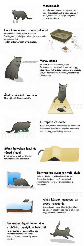 Miből tudod, hogy a macskád el szeretne tüntetni az élők sorából